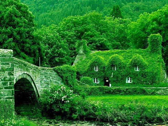 green leaf covered house