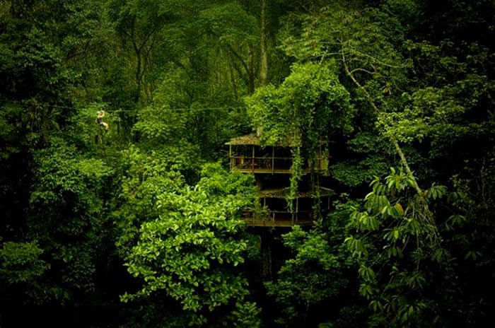 Treehouse in the jungle canopy at the Finca Bellavista Treehouse Community in Costa Rica