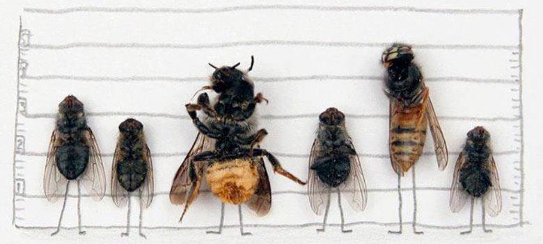 how to drive away flies