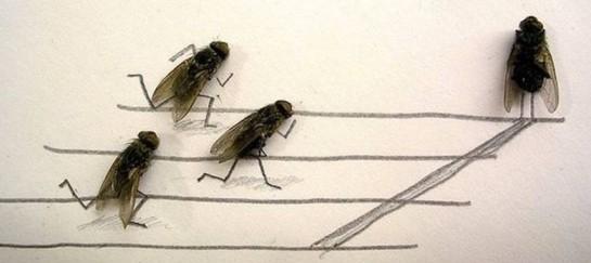Flychelangelo – Dead Flies Art by Magnus Muhr