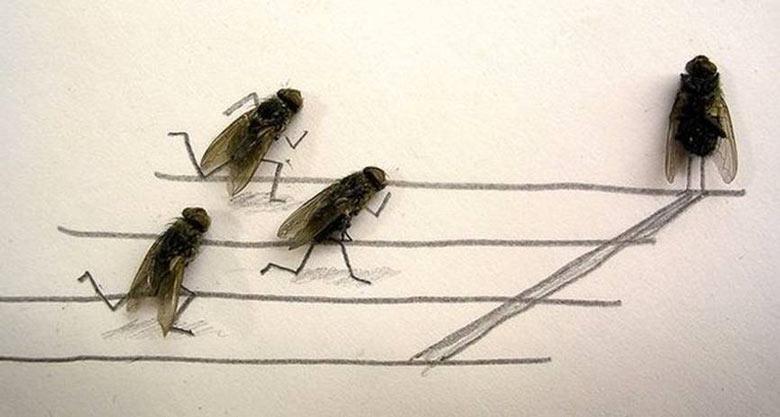 Flychelangelo Dead Flies Art on JEBIGA