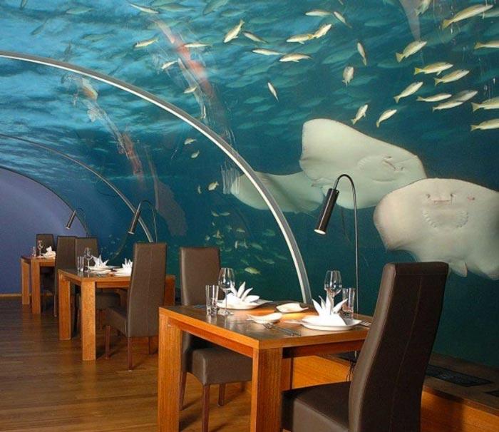 Stingray swimming near the Ihtaa Underwater Restaurant at the Conrad Maldives Rangali Island