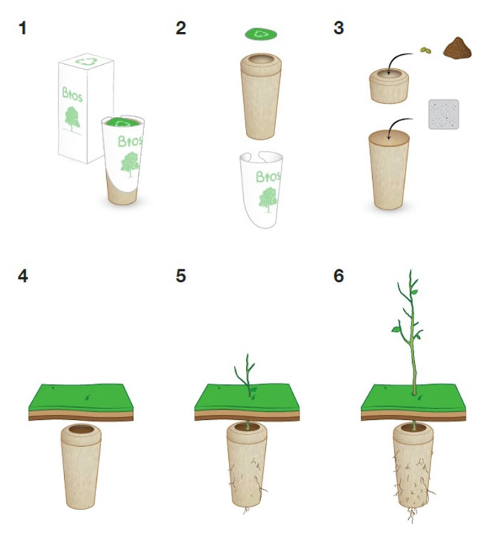Growing stages of the Bios Urn A Biodegradable and eco-friendly Urn