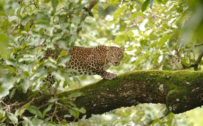 Wildlife at Leopard Hills Sabi Sand Game Reserve