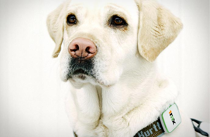 Trax real-time gps tracker for dogs