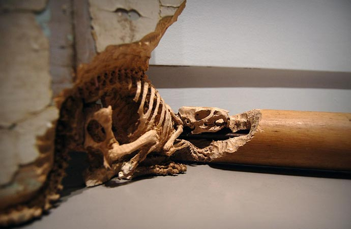 WOOD CARVINGS | BY MASKULL LASSERRE