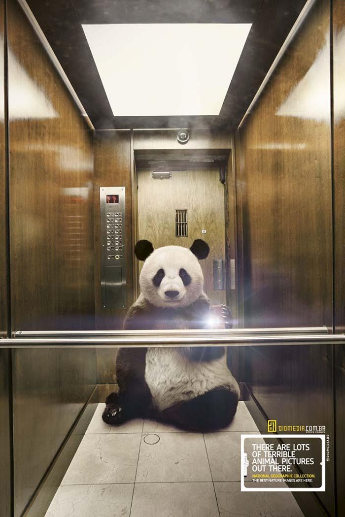 Panda Animal selfie