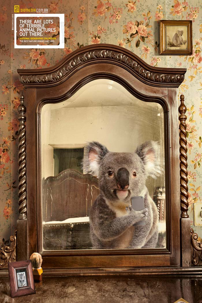 Koala Animal selfie