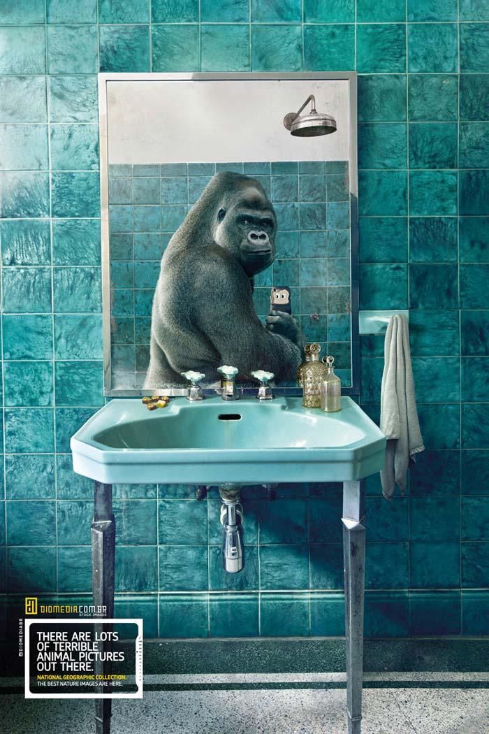 Gorilla Animal selfie