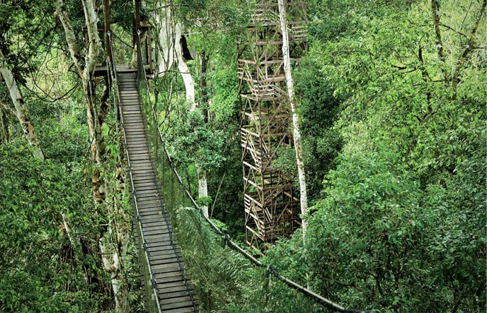 Tree houses and jungle adventure in the Amazon