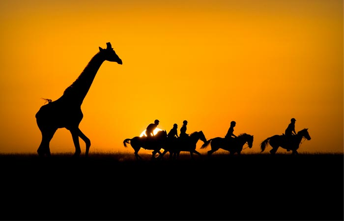 Safari at Kicheche Bush Camp in Kenya