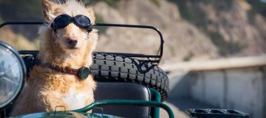 WHISTLE DOG GPS