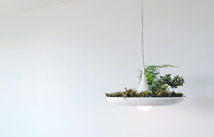 Plant garden and lamp