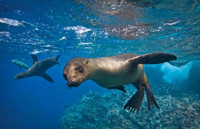 Seals at Galapagos Islands