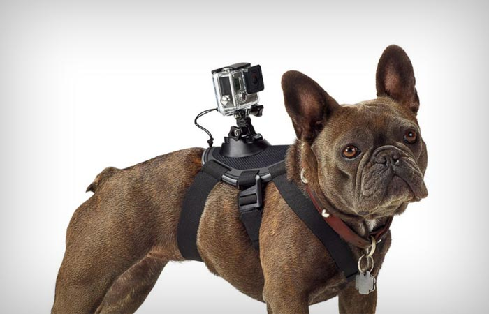 Fetch dog harness from GoPro