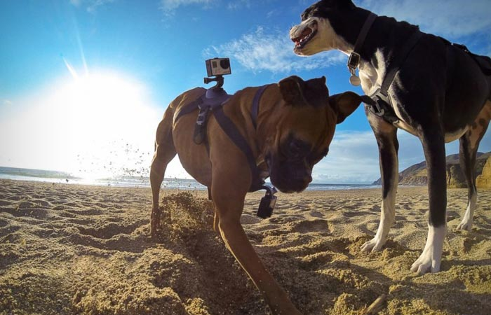Dog harness from GoPro
