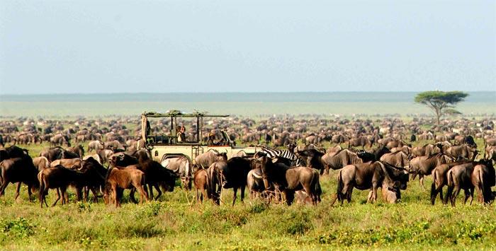 Nomad Safari wild life game tours
