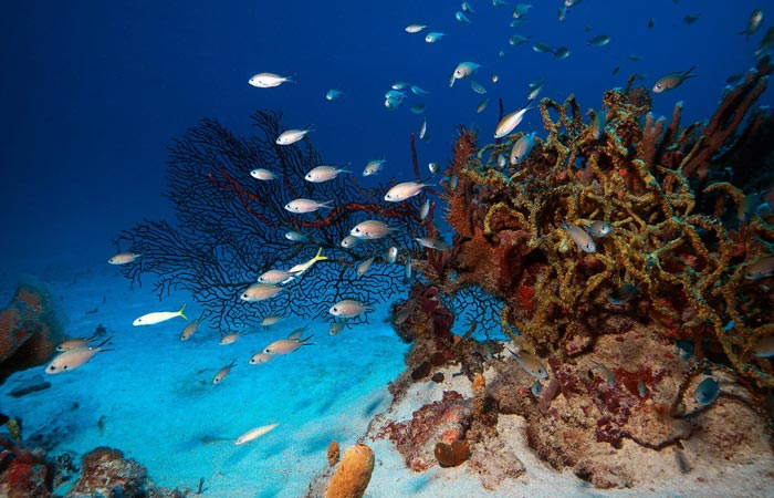 Scuba diving at Palm Island Resort