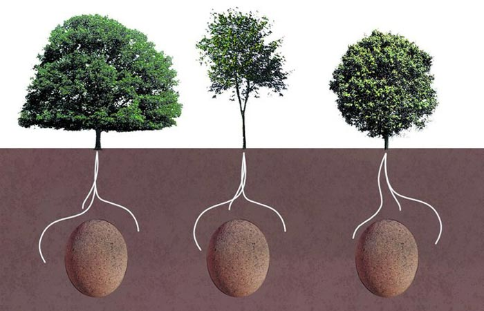Stages of growth of Capsula Mundi
