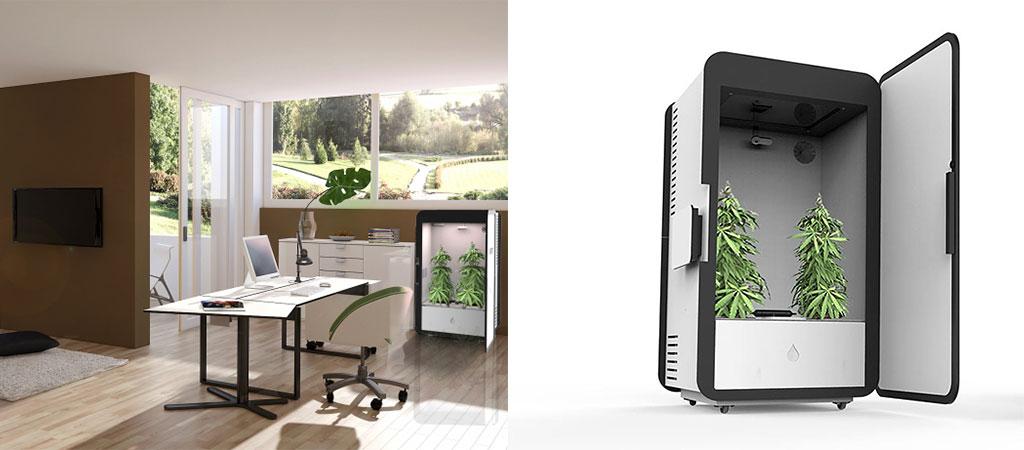 Leaf Cannabis Growing System