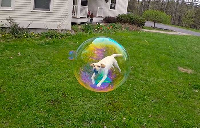 A dog jumping into bubble