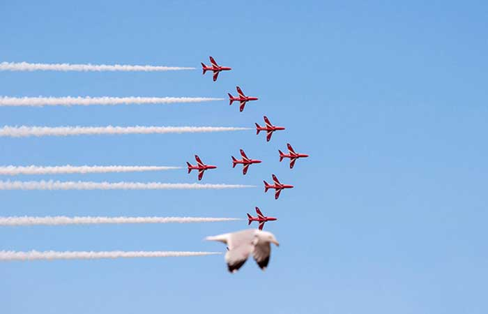 A bird flying with airplanes