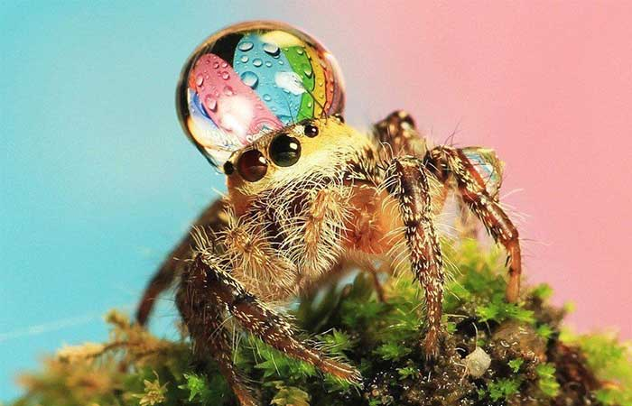 A drop of water on spider's head