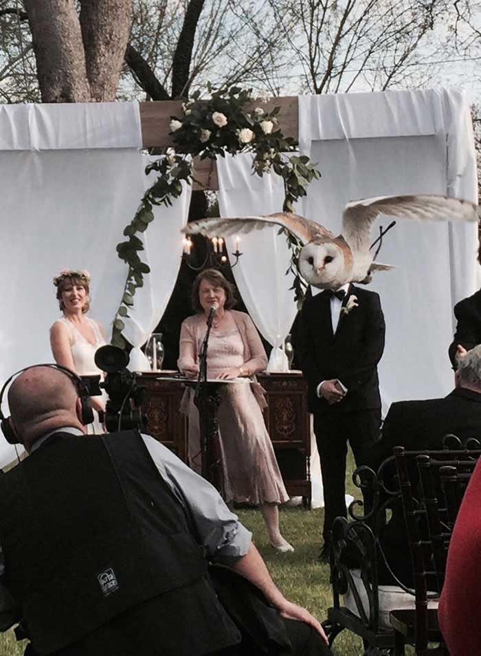 An owl crashing a wedding