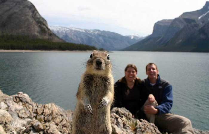 A squirrel photobombing a couple
