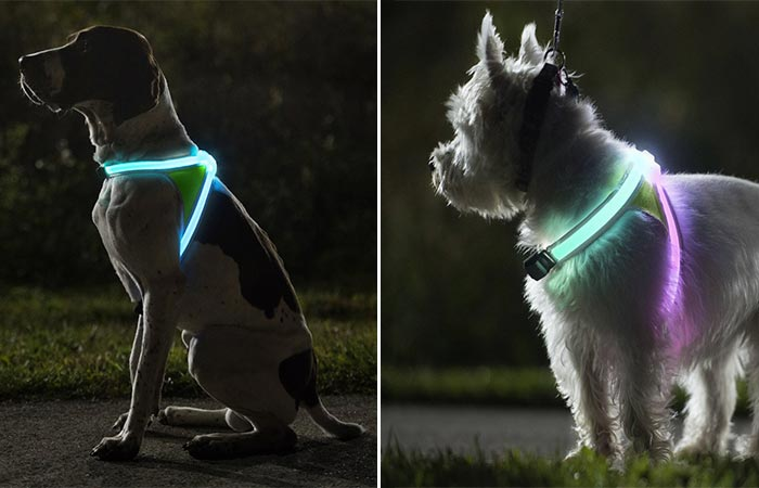 Noxgear LightHound on Different Dogs