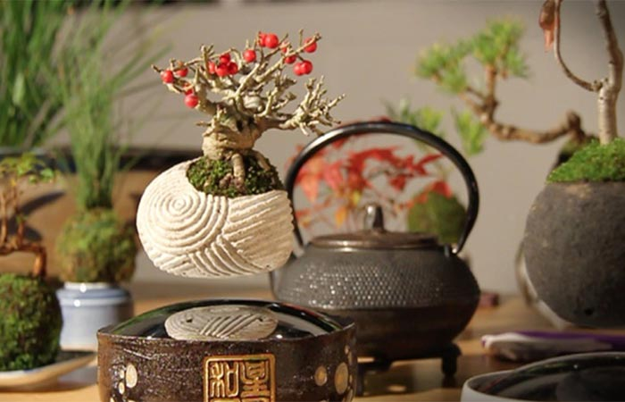 A Floating Bonsai Tree