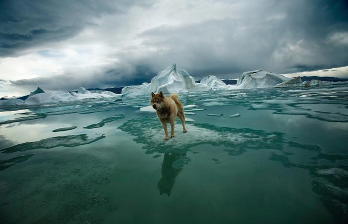 A photo of a wolf in icy scenery from the book Arctica by Sebastian Copeland.