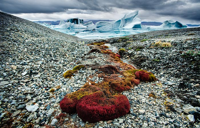Beautiful Arctic landscape photo taken from the book Arctica by Sebastian Copeland.