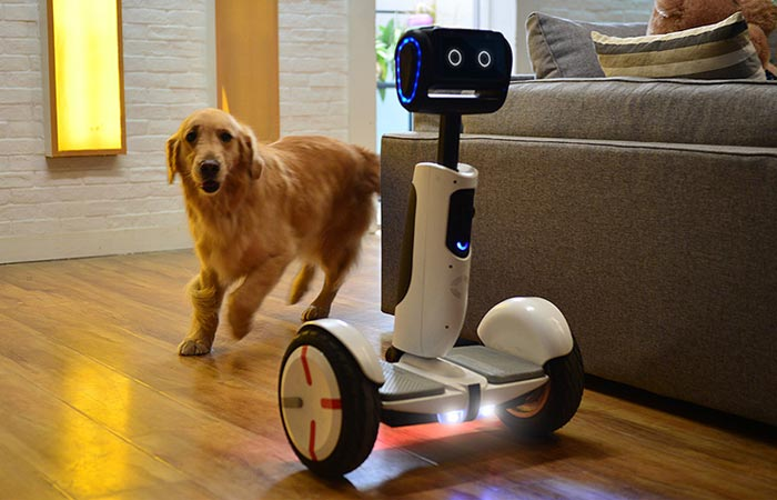 Segway Advanced Personal Robot being chased around the sofa by a golden retriever.