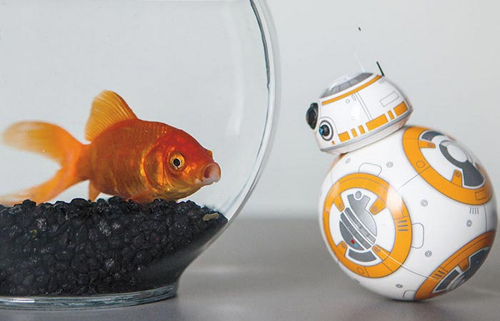 BB-8 watches the fish.
