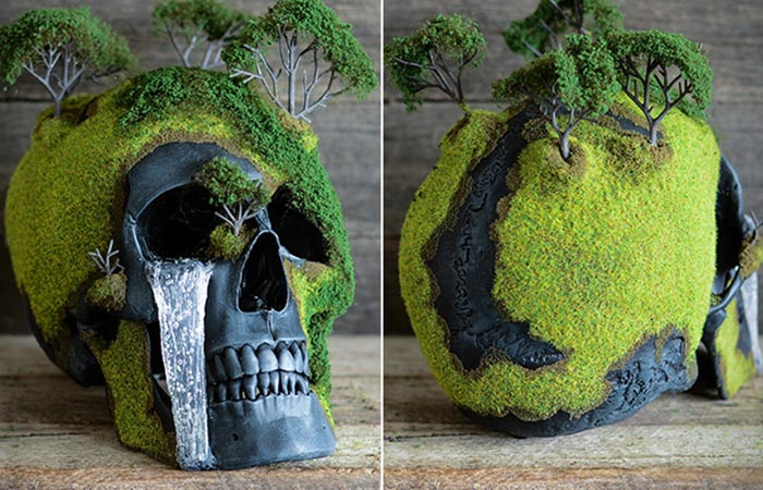 Two Images Of Spring Bonsai Mountain Skull