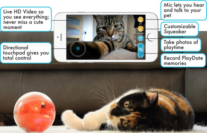 A Cat Playing with the PlayDate as well as all the features that are outlined.