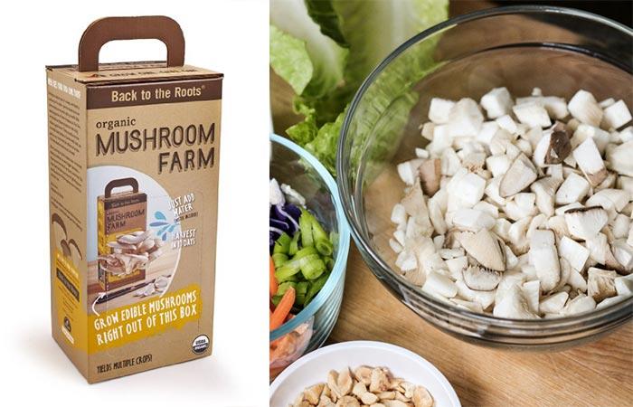 Mushrooms From Back To The Roots Organic Mushroom Farm