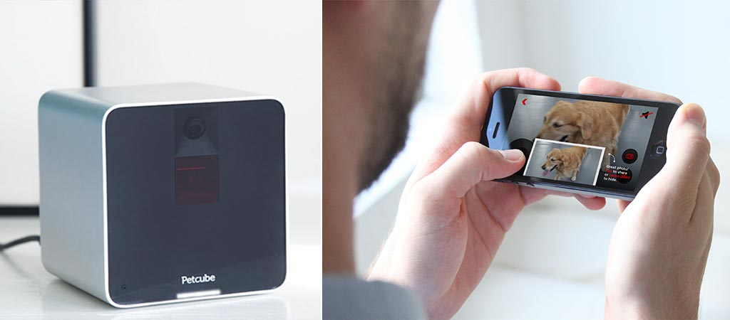 The pet cube and a view of the smartphone app