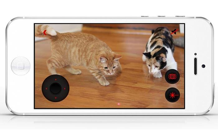 Cats chasing the laser from the Petcube via the app