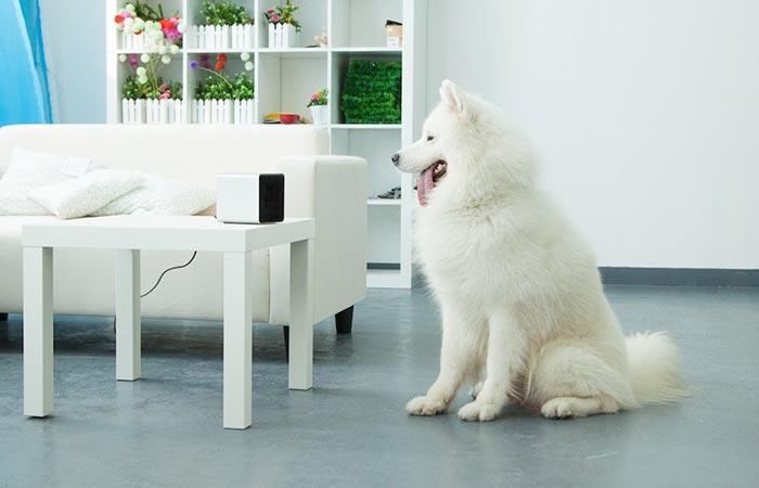 Dog looking at the petcube