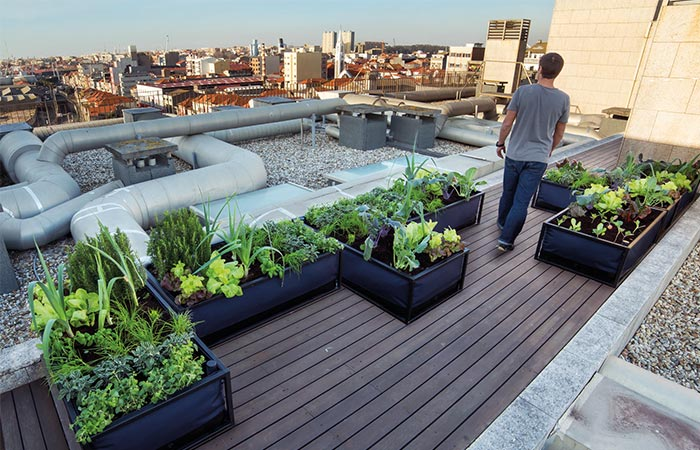 Noocity Growbed On A Rooftop