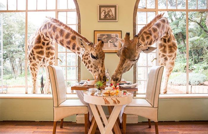 The Safari Collection Giraffe Mansion