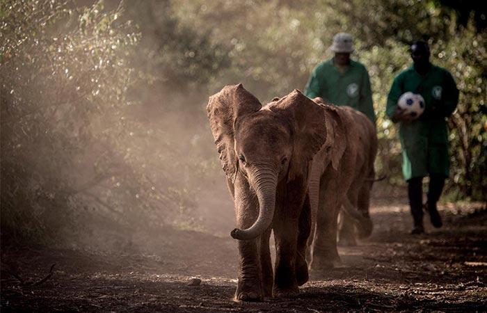 The Safari Collection Elephants Walk