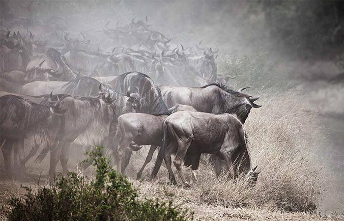 The Safari Collection Wild Animals