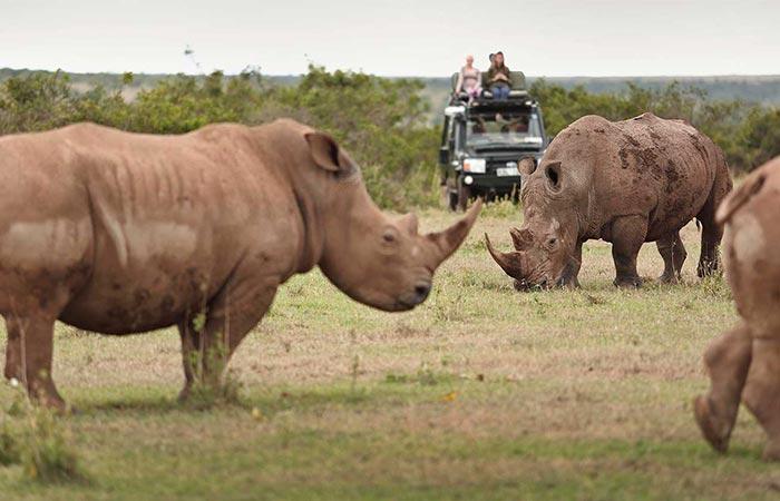 The Safari Collection Rhino Watching