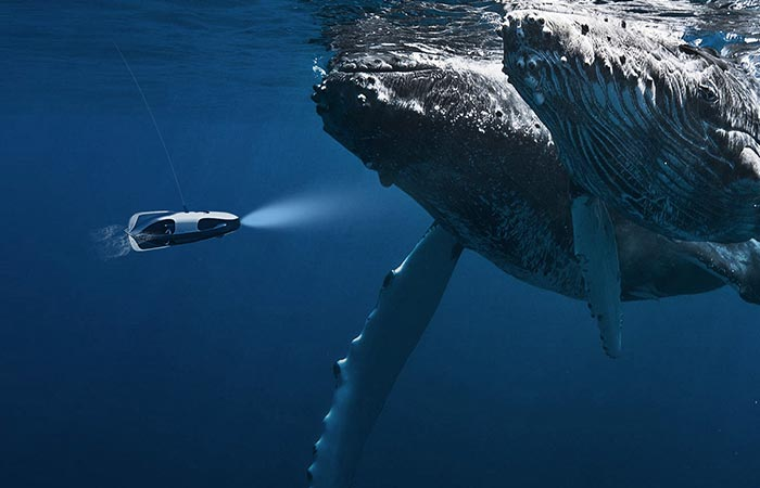 PowerRay Underwater Robot close to whales