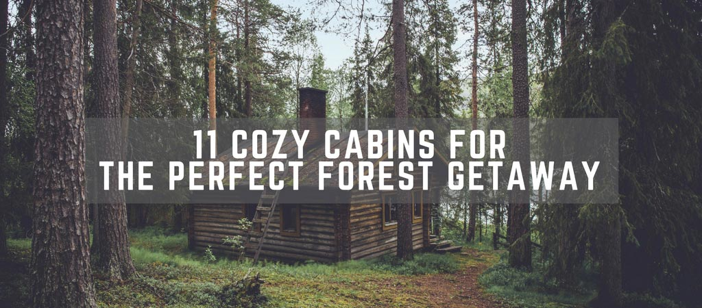 11 Cozy Cabins For The Perfect Forest Getaway
