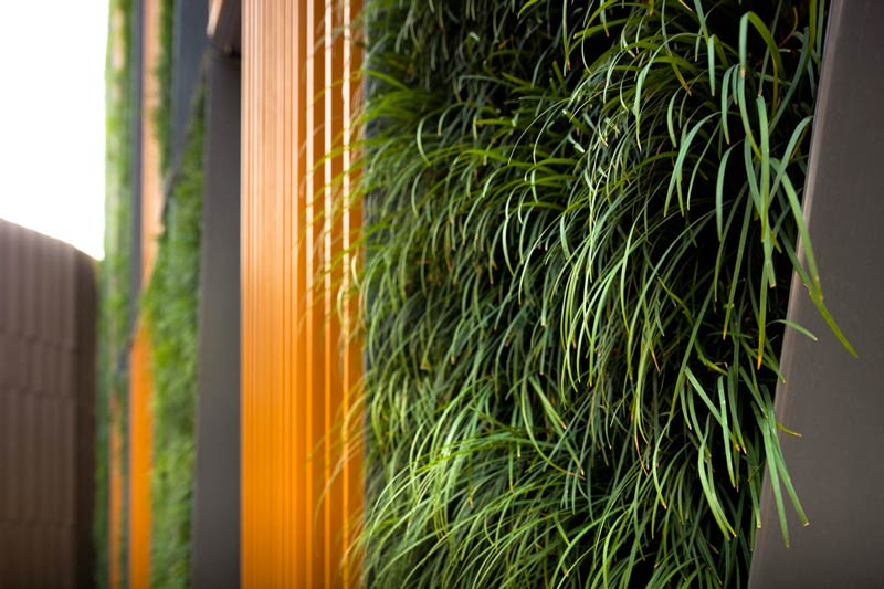 Closeup view of the Tokyo Dwarf wall of grass at the Vertical Living Gallery by Sansiri and Shma in Bangkok