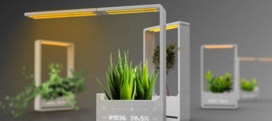 Bonny Plant Lamp – A Solar Powered Plant Lamp by Chun Jiang Yao